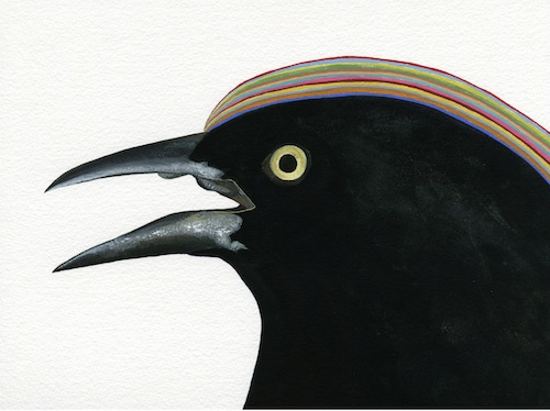 Marill_male_grackle